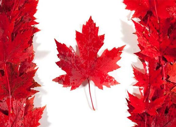 مهاجرت به کانادا از طریق ثبت شرکت یا owner operator